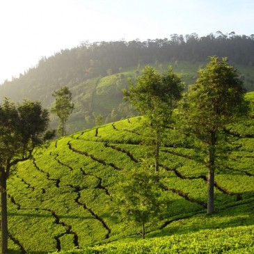 in der Kulisse von Bollywood kaschiert das Grün die Armut