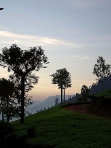 nilgris - blaue Berge im Kontrast des Grüns der Teefelder